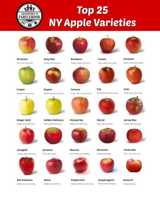 ny-apple-varieties