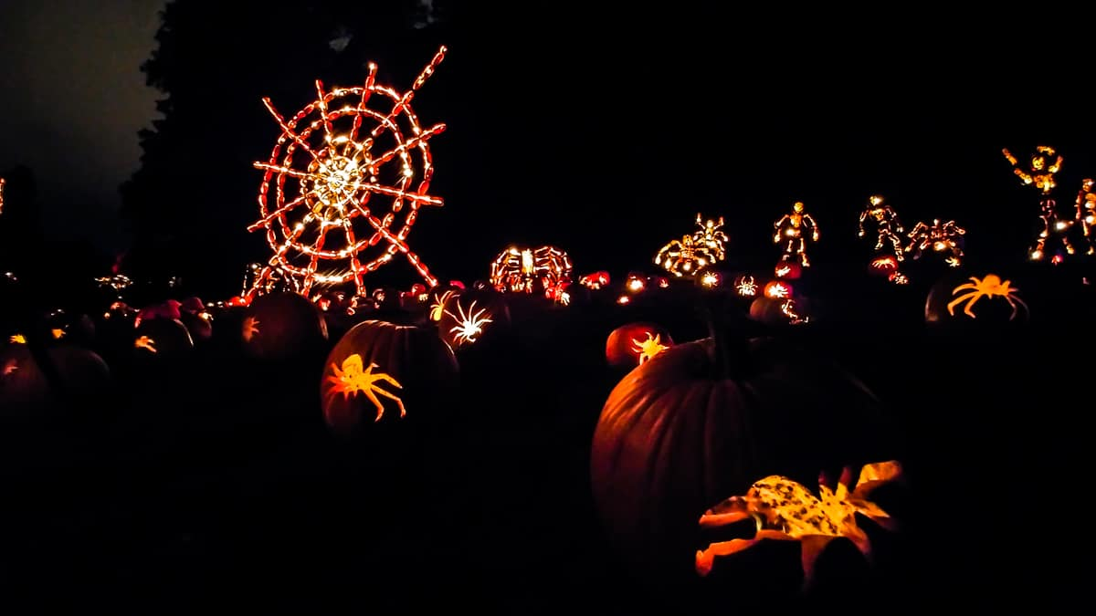 The Great Jack O'Lantern Blaze spiderweb and spiders